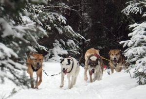 dogsledding tours, dogsled trips, snowmobiling, cross country skiing, skating, skiing, snowmobile tours, ottawa, toronto, barrie, renfrew, pembroke, belleville, bancroft, kingston, toronto, ontario.