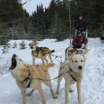 Dogs love sledding