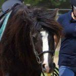 Super Sweet Camp Horses
