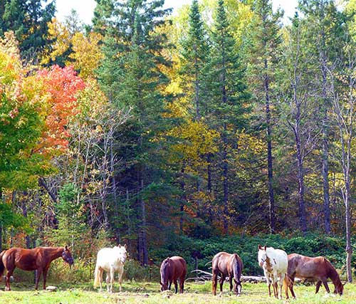 riding trail horses near algonquin