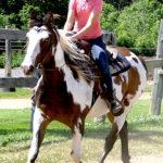 Handsome Horse!