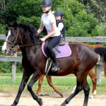 Canter 'Lead' exercise