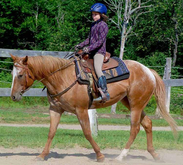 Trail Riding & Public Riding Stables. Horse Camps & Equestrian Programs near Algonquin Park, Ontario. Close to Toronto, Barrie, Ottawa, Orillia, Kingston & London